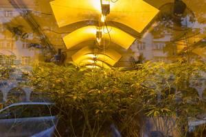Cannabis im Schaufenster von Wunderbaum Expert in Wien