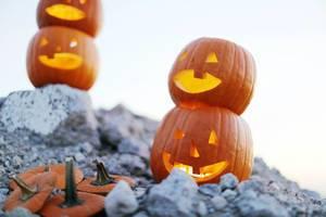 Carved pumpkins for Halloween, rocky ground (Flip 2019)