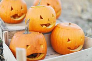 Carved pumpkins in a crate for Halloween party (Flip 2019)