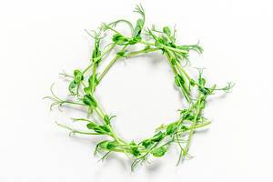 Circle of micro-green peas on a white background. The view from the top (Flip 2019)