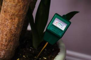 Close Up of a Moisture Meter in the Soil of a Plant to test the level of moisture