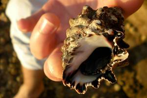 Close-up of a sea shell found on the Red sea shore in Hurgada, Egypt