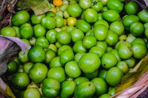 Close up of freshly harvested green tomatoes