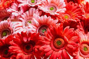 Close up of red flowers on display