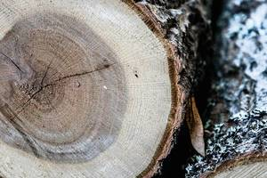 Close Up on a Pile of Logs