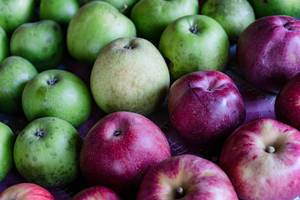 Close Up on the Red and Green Apples