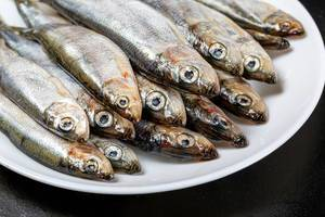 Close-up von rohen Fischen auf einem weißen Teller