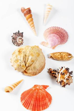 Collection of different seashells on white background.