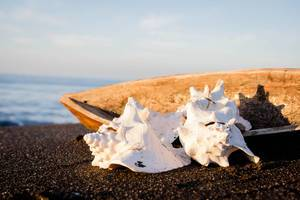 Conch shells and a wood vessel on sand