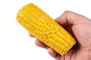 Cooked Young Corn in the hand (Flip 2019)
