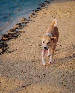 Cute puppy wandering on the shore (Flip 2019)
