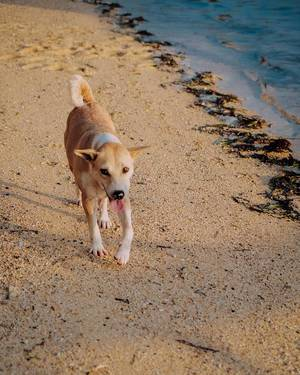 Cute puppy wandering on the shore