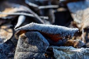 Das Ende des Herbst ist der Anfang des Winters  - Ein frostiges Blatt