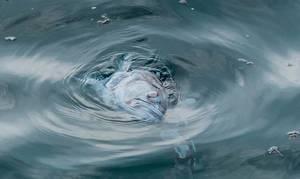 Death fish in the sea