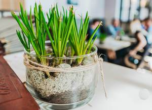 Decor Plant In Restaurant