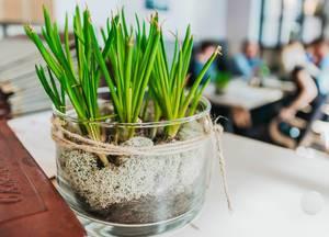 Decor Plant In Restaurant