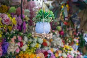 Decoration with Plant hanging at a Vendor in Flower Market of Saigon