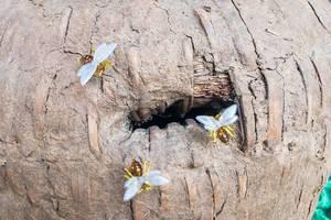 Deko-Bienen und ein künstlicher Bienenstock