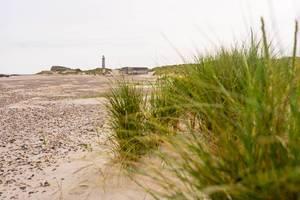 Der alte Leuchtturm von Skagen Dänemark mit kleinen Sanddünen im Vordergrund