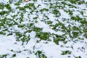 Der erste Schnee auf einer Wiese