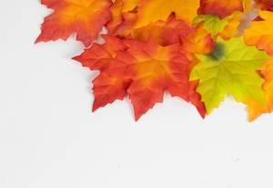 Der Herbst ist da. Abgefallene Ahornblätter