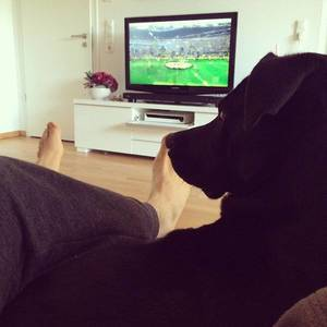 Derbytime!!! #BVBS04 #echteliebe #skybuli #derby #bundesliga #laboftheday #instadog #picoftheday #puppy #animals