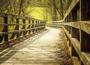 Diagonal-zentrierte Aufnahme einer hölzernen Brücke umgeben von grünen Laubwerk