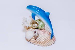 Dolphin with shells and corals