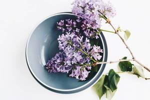 Draufsicht von Fliederblumen auf einem Teller. Frühjahr