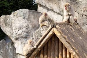 Drei Affen auf einem Haus