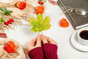 Dry maple leaf in the hands of a woman as a symbol of the onset of autumn
