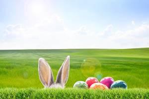 Easter Bunny on the Easter egg hunt