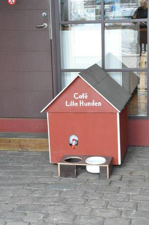 Ein Café für Hunde in Göteborg