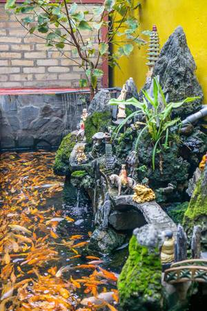 Ein Fischteich mit Goldfischen in einem Pagoda Tempel in Chinatown, Saigon