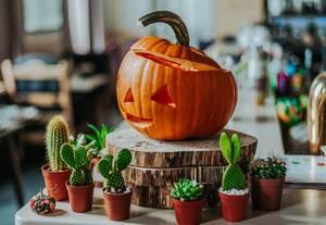Ein freundlicher Halloween-Kürbis und viele Kakteen