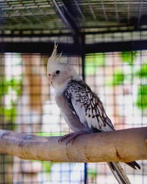 Ein kleiner Nymphensittich-Vogel sitzt allein auf einem Ast in seinem Käfig