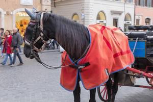 Ein Kutschenpferd mit einer roten Decke in Rom