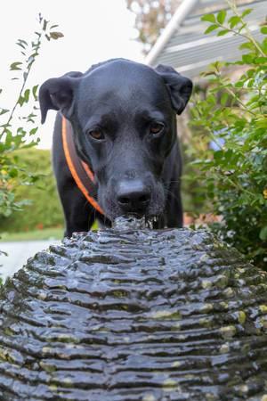 Ein schwarzer Hund erfrischt sich an einem Kugelbrunnen und trinkt aus der Fontäne