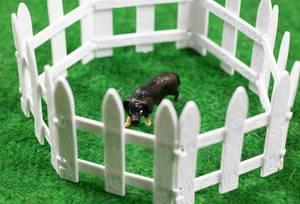 Ein schwarzes Schweinchen hinter weißem Zaun