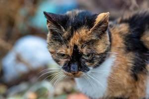 Eine bunte Katze mit grünen Augen guckt bedrohend auf der Pirsch