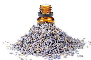 Eine Flasche ätherische Öle mit Lavendelblüten vor weißem Hintergrund