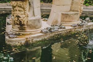 Eine Gruppe Wasserschildkröten an einem Brunnen