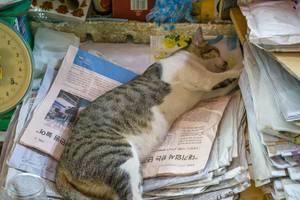 Eine Katze schläft auf einen Stapel koreanischer Zeitung auf dem Markt in Saigon