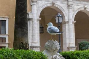Eine kleine Möwe sitzt auf einer Statue am Palazzo di Venezia in Rom