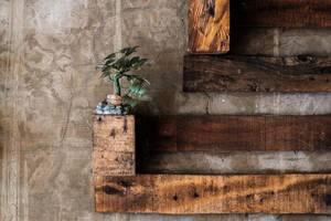 Eine Minipflanze an einer mit Holz stilisierten Betonwand - Industrial Design