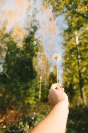 Eine Pusteblume in der Hand gehalten mit einer Waldlandschaft im Hintergrund