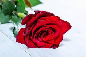 Eine rote Rose auf einem weißen Holztisch