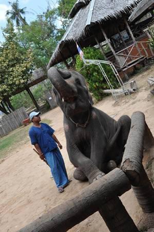 Elefant und sein Trainer