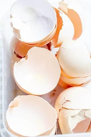 Empty broken egg shell (Flip 2020)
