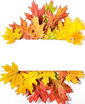 Empty White Space with Colorful Autumn Leaves as a Frame
